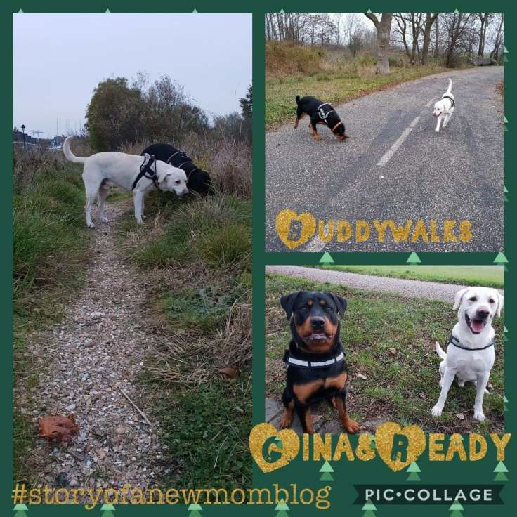 buddywalks collage weekblog 60